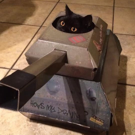DIY Cardboard Costumes: Cat in a Tank